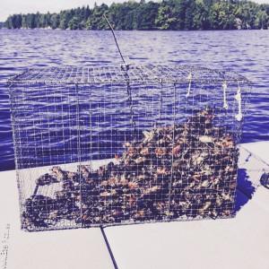 Kräftfiskepremiär